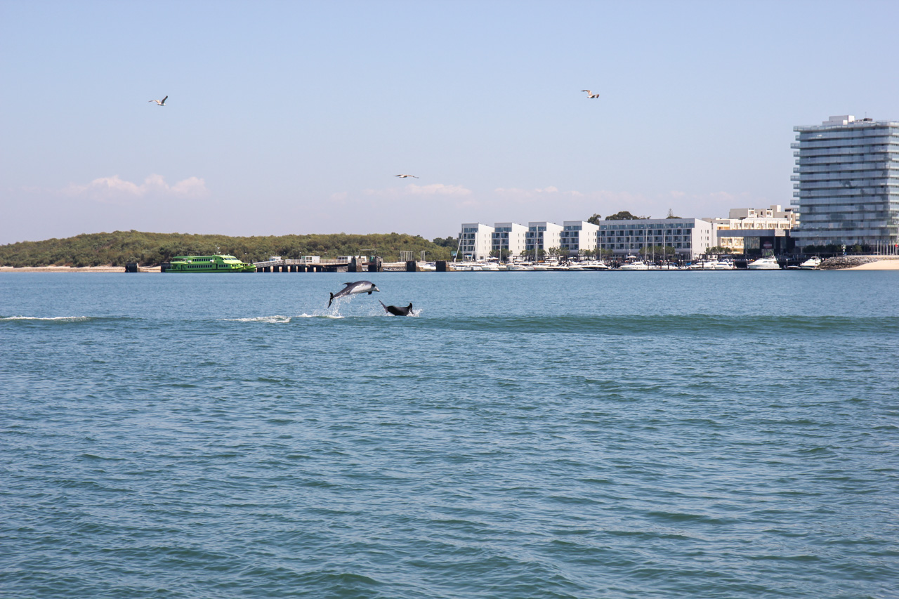 Dolphin Watching In Setubal