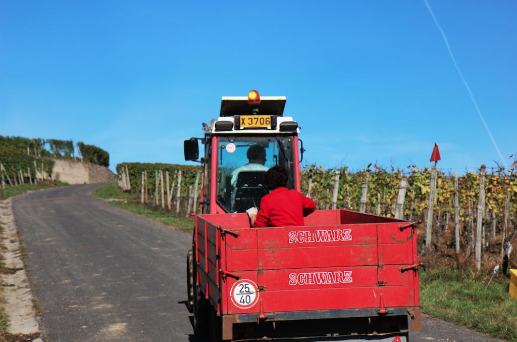 Harvest Luxemburg - Vins moselle