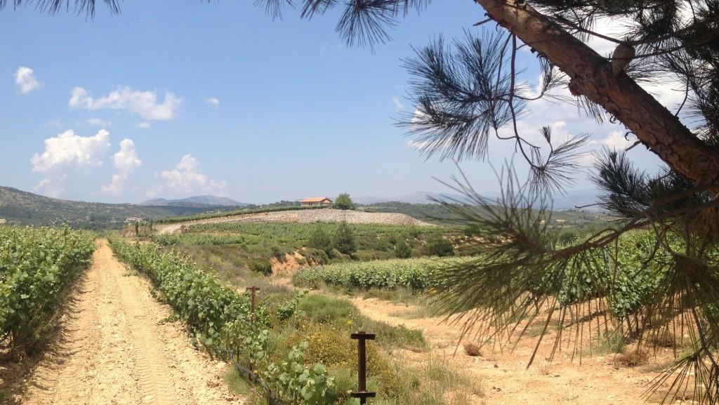 vineyards_nemea