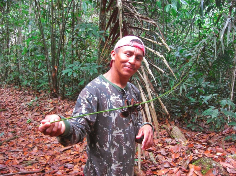 Amazonas spider